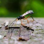 Insekt - Doreen Schoettker