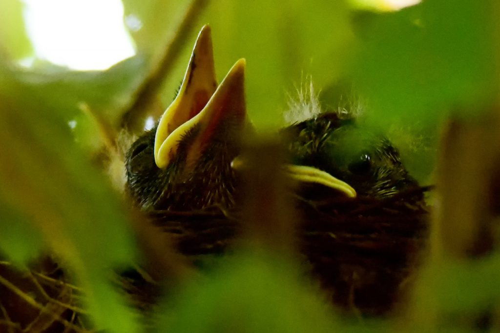 Hungry Birds - G.Woepkemeier